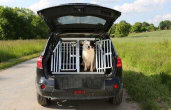 Bil med hundebur
